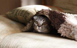В аэропорту Борисполь всю ночь ловили кошку: как так вышло