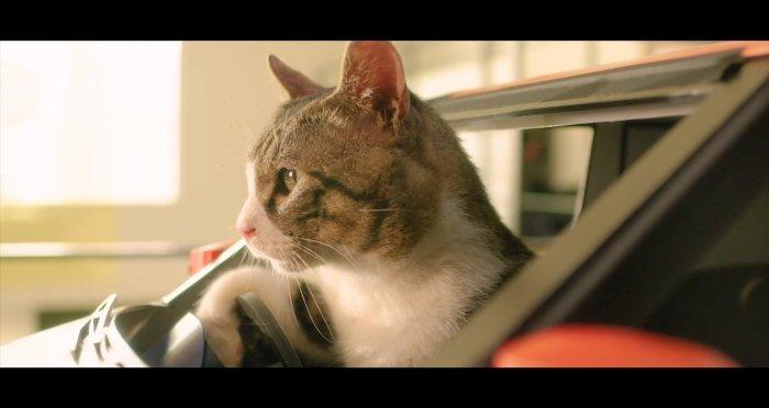 Котик в міні-автівці.