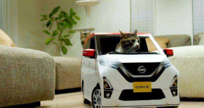 Навіть у кота є своя машина.